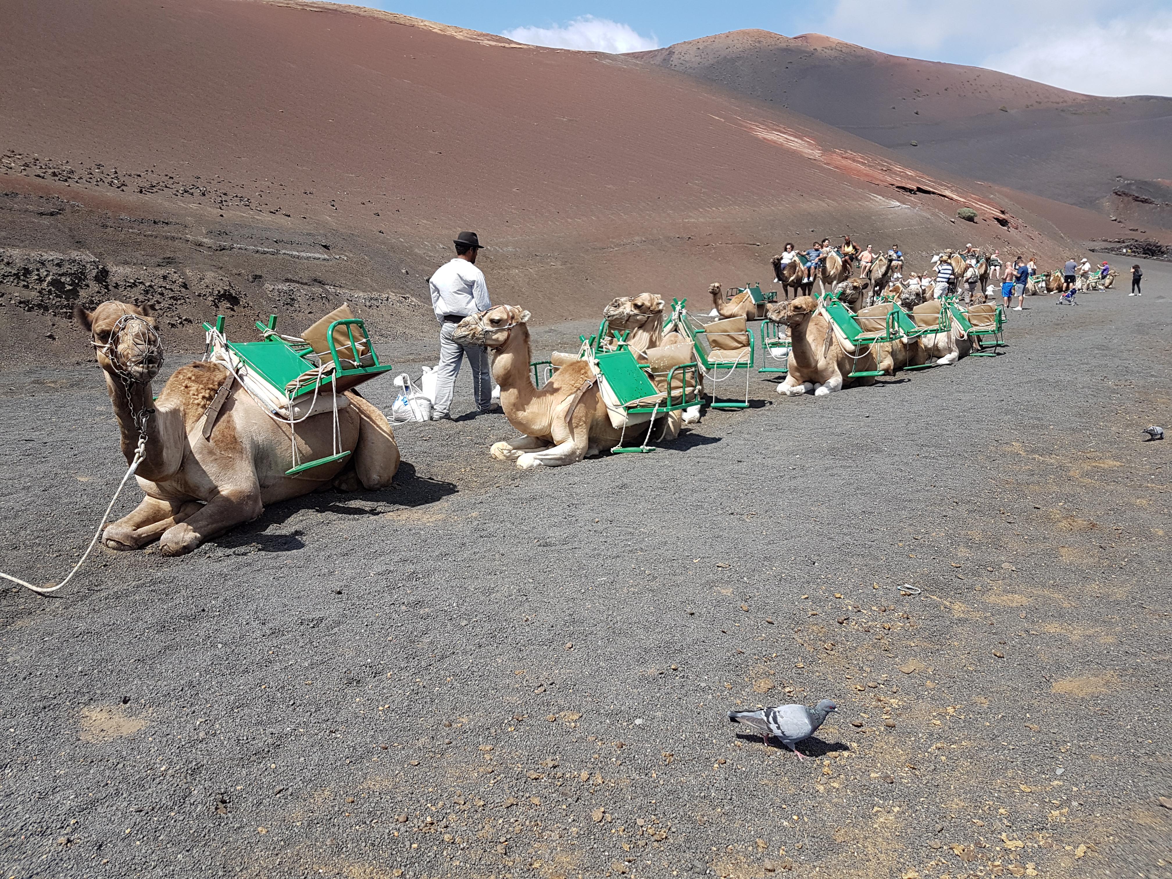 Aida Kreuzfahrt Kanaren und Madeira - Lanzarote - Timanfaya