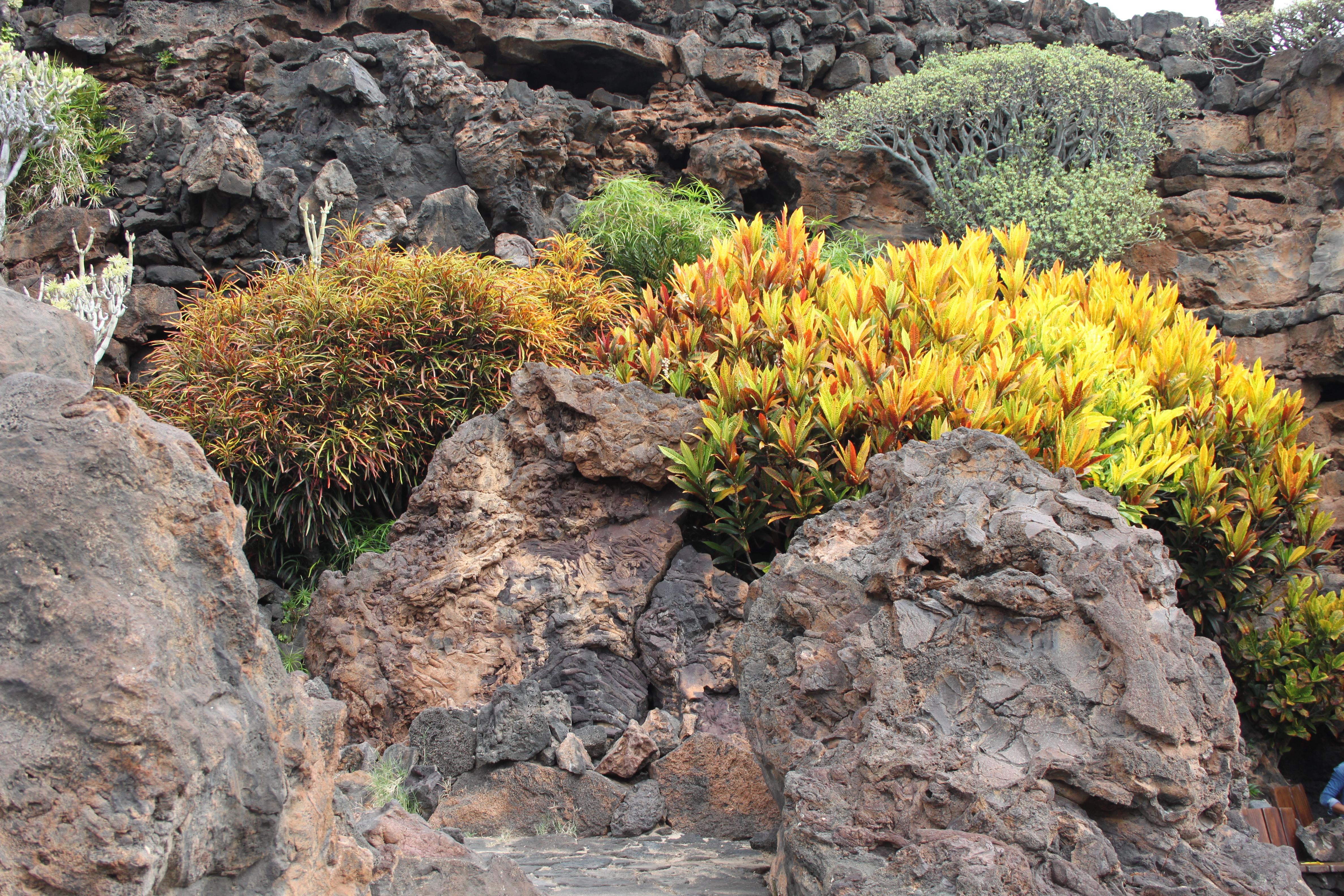 Aida Kreuzfahrt Kanaren und Madeira - Lanzarote - Jameos del Agua