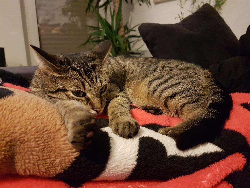 Wochenrückblick 04/ 2017 - Cat Content